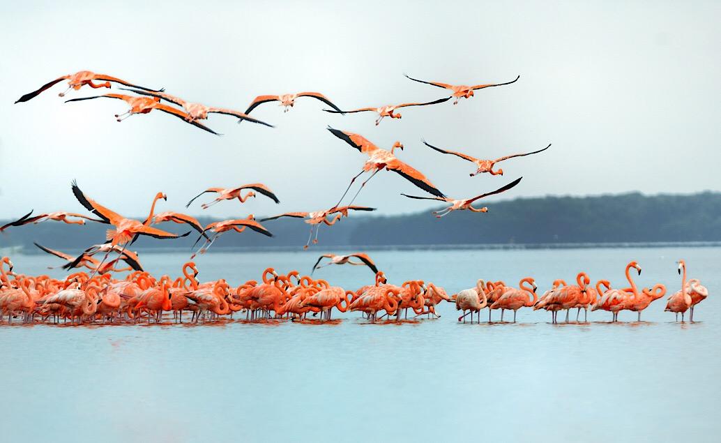 Pláže ostrova Holbox a exotická příroda Yucatánu